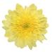 Zembla Yellow